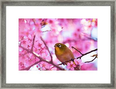 White Eye Bird Framed Print by masahiro Makino