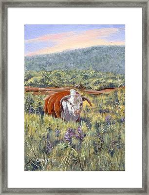 White Face Bull Framed Print by Peggy Conyers