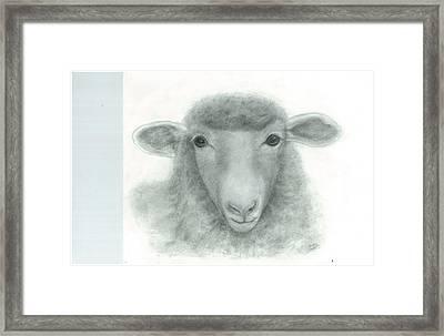 White Face Sheep Framed Print by Danielle McCoy