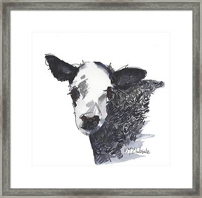 White Faced Hereferd Calf Baby Cow Framed Print