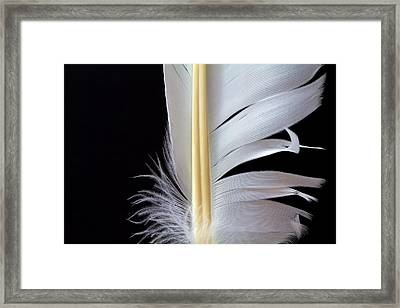 White Feather Framed Print by Bob Orsillo