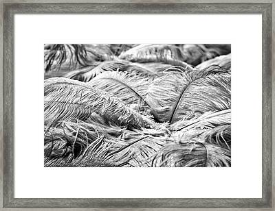 Framed Print featuring the photograph White Feathers #4 by Stuart Litoff