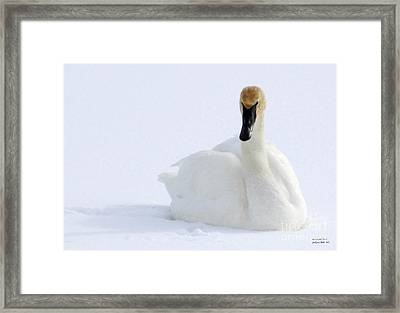 White Feathers On Snow Framed Print