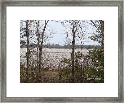 White Fields Framed Print