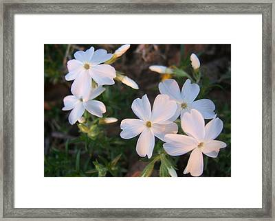 White Floral Lights Framed Print by Lisa Roy