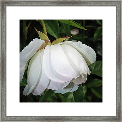 Framed Print featuring the photograph White Floral by Tikvah's Hope