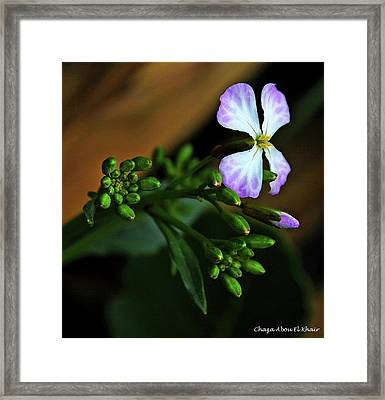 White Flower 3 Framed Print by Chaza Abou El Khair