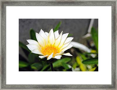 White Flower 3 Framed Print by Isam Awad