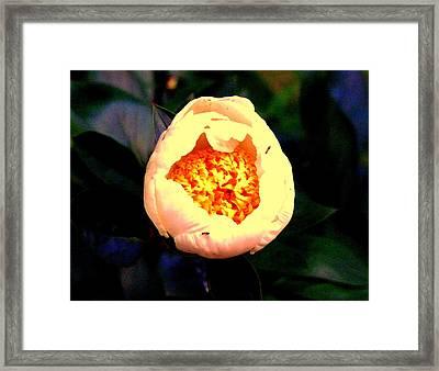 White Flower Framed Print by Aron Chervin