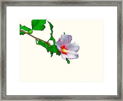 White Flower And Leaves Framed Print