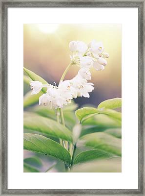 White Flower By Iuliia Malivanchuk Framed Print by Iuliia Malivanchuk