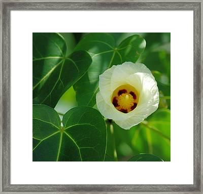 White Flower Framed Print by Christine Savino