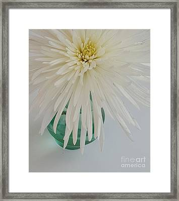 White Flower In A Vase By Jasna Gopic Framed Print by Jasna Gopic