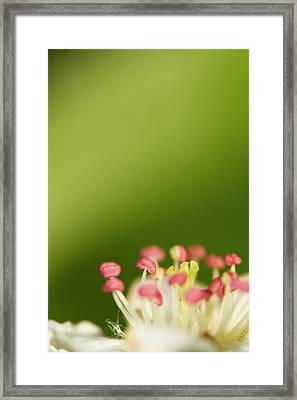 White Flower Framed Print by Jouko Mikkola