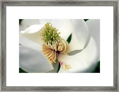 Framed Print featuring the photograph Magnolia Blossom by Meta Gatschenberger