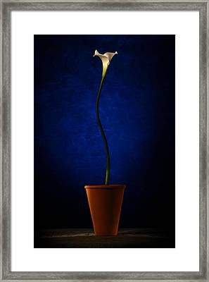Framed Print featuring the photograph White Flower by Riana Van Staden