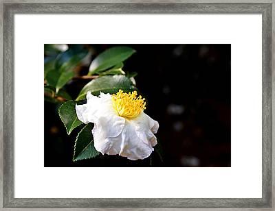 White Flower-so Silky And White Framed Print
