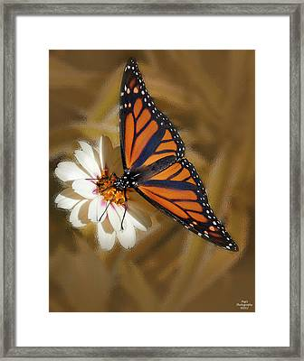 White Flower With Monarch Butterfly Framed Print