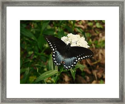 White Flowered Butterfly Framed Print
