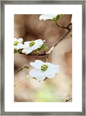 Framed Print featuring the photograph White Flowering Dogwood Tree Blossom by Stephanie Frey