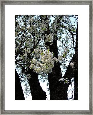 White Flowers - 44 Framed Print