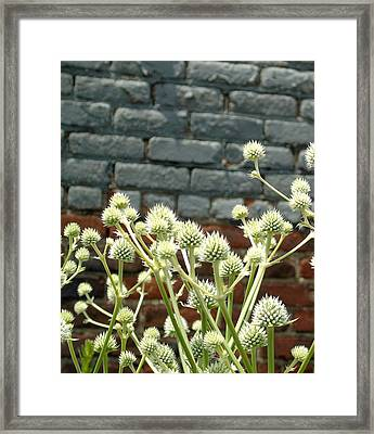 White Flowers And Bricks Framed Print