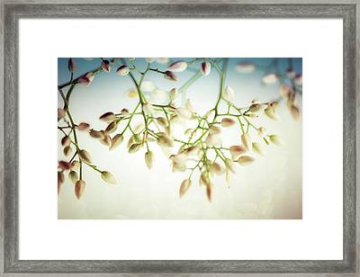 Framed Print featuring the photograph White Flowers by Bobby Villapando