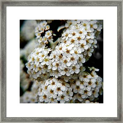 White Flowers In Tennoji Park, Osaka Framed Print by Photos by Jeremy Tan