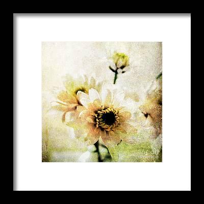 Pretty Flowers Framed Prints