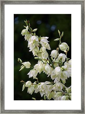 White Flowers Photography Framed Print