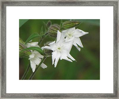 White Flowers Framed Print by Sylvia Wanty