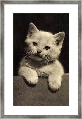 White Fluffy Kitten Framed Print by German School