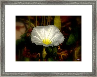 White For Me Framed Print