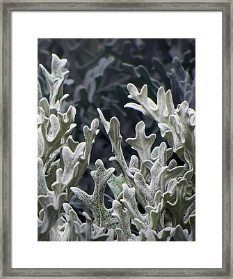 White Forest 2 Framed Print by Michael Taggart II