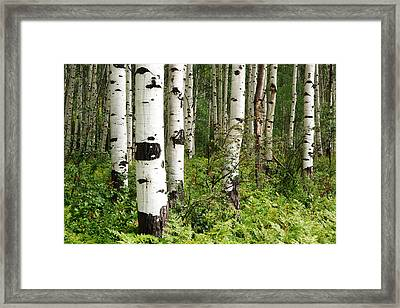 White Forest Framed Print by Eric Foltz