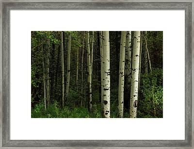 Framed Print featuring the photograph White Forest by James BO Insogna