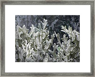 White Forest Framed Print by Michael Taggart II
