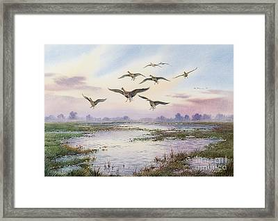White-fronted Geese Alighting Framed Print by Carl Donner