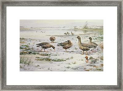 White Fronted Geese Framed Print
