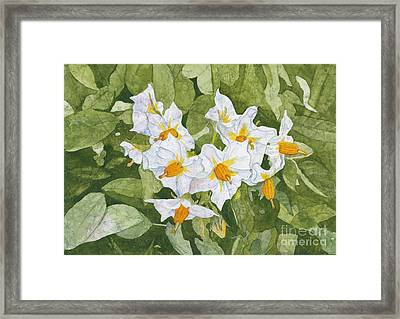 White Garden Blossoms Watercolor On Masa Paper Framed Print