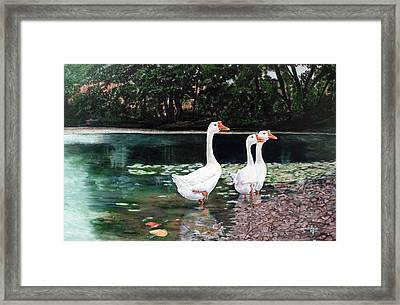 White Geese In Early Fall '07 Framed Print
