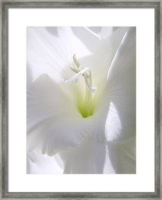 White Gladiola Flower Macro Framed Print by Jennie Marie Schell