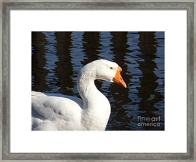 White Goose Framed Print by Elizabeth Fontaine-Barr