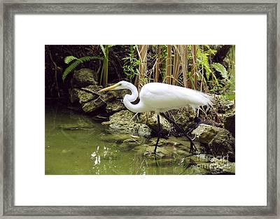 White Heron Framed Print by Cindy Lee Longhini