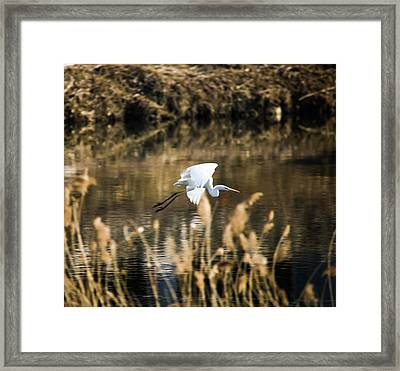 White Heron Framed Print