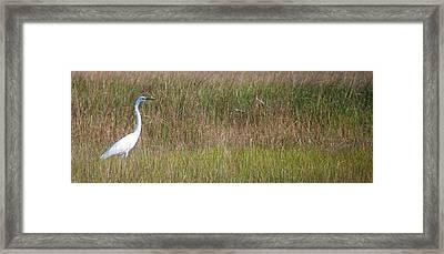 White Heron II Framed Print