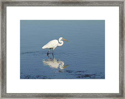White Heron Reflected Framed Print by Barry Culling