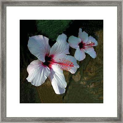White Hibiscus Pair Framed Print