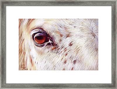 White Horse Close-up Framed Print by Elena Kolotusha