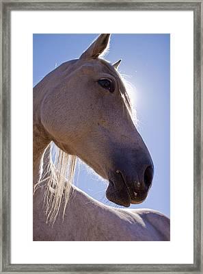 White Horse Framed Print by Dustin K Ryan
